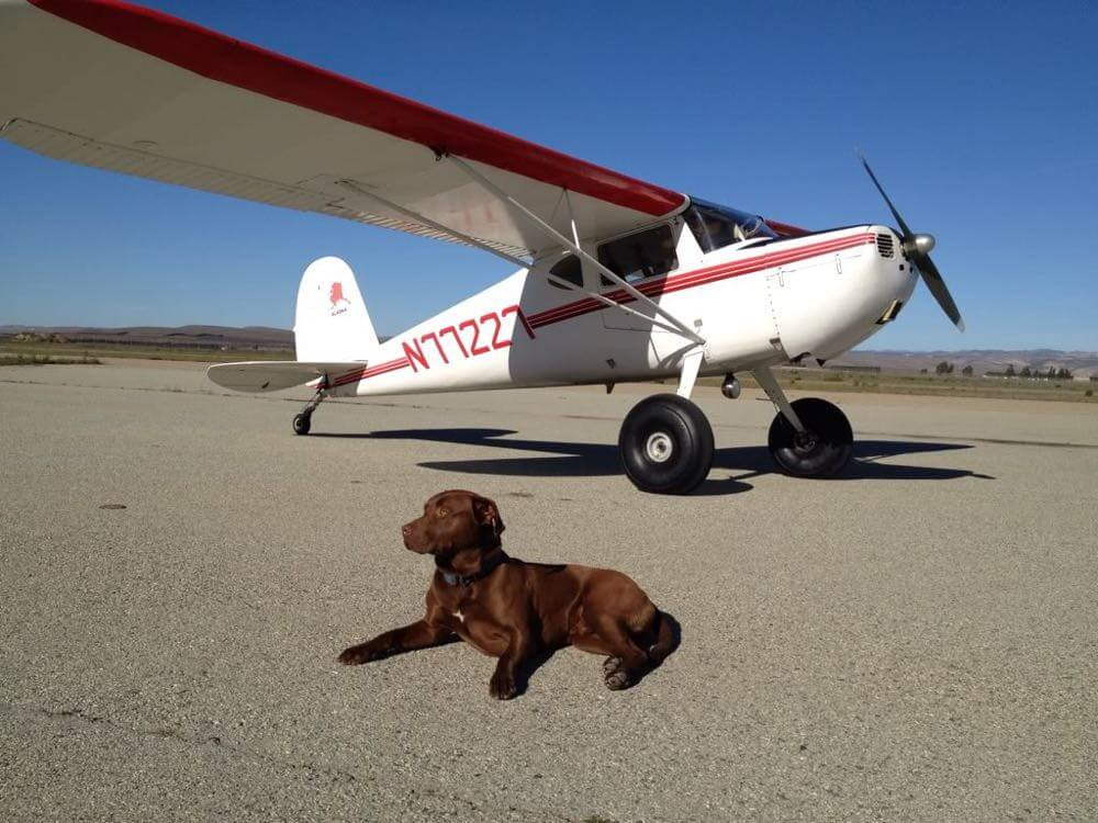 Fly your dog buy fly and learn for Best airline to fly dogs